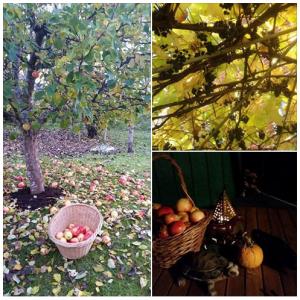 3 slike jabuka